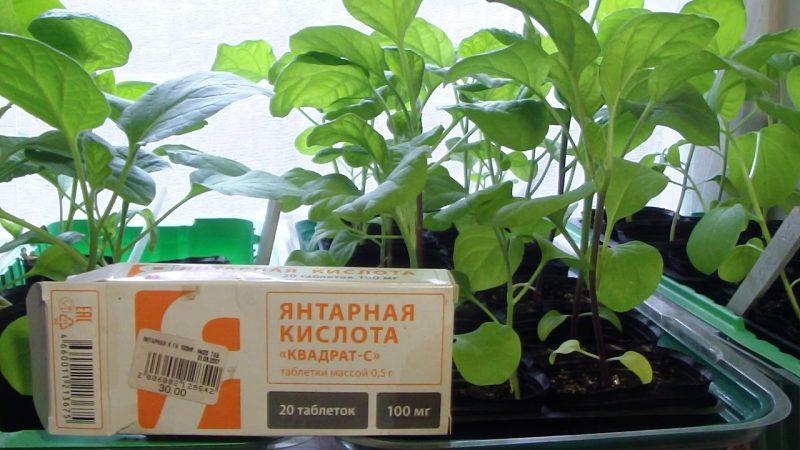 «Янтарная кислота для растений» фото - kak ispolzuetsya yantarnaya kislota dlya pomidorov 2 800x450