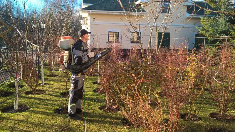 «Обработка сада осенью от болезней и вредителей» фото - obrabotka derevyev osenyu ot bolezney 800x451