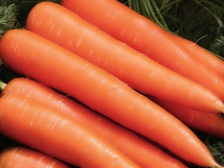 «Когда сажать морковь семенами в открытый грунт?» фото - sort barynya