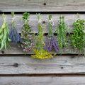 «Чем полезны травы для бани? Как сделать отвар для бани своими руками? Рецепты и рекомендации» фото - travy bani 1 120x120