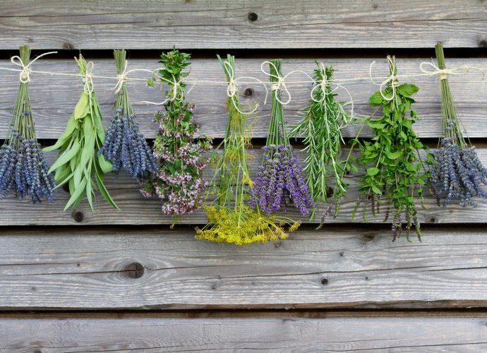 «Чем полезны травы для бани? Как сделать отвар для бани своими руками? Рецепты и рекомендации» фото - travy bani 1 690x500