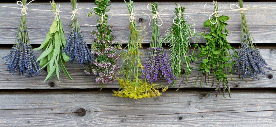 «Чем полезны травы для бани? Как сделать отвар для бани своими руками? Рецепты и рекомендации» фото - travy bani 1 920x425