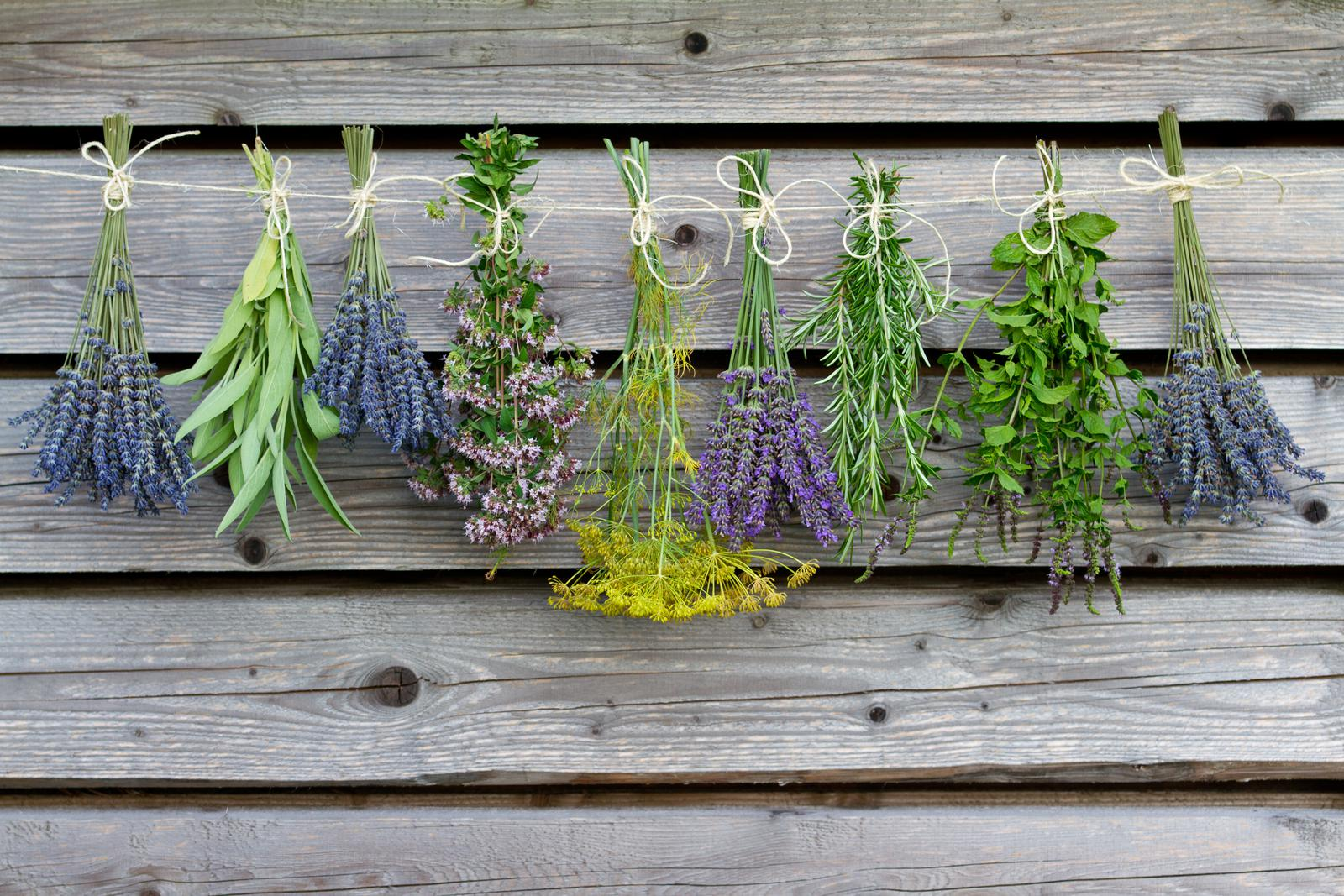 «Чем полезны травы для бани? Как сделать отвар для бани своими руками? Рецепты и рекомендации» фото - travy bani 1