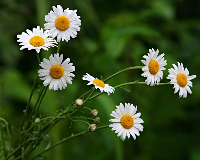 «Чем полезны травы для бани? Как сделать отвар для бани своими руками? Рецепты и рекомендации» фото - travy bani 6 800x640