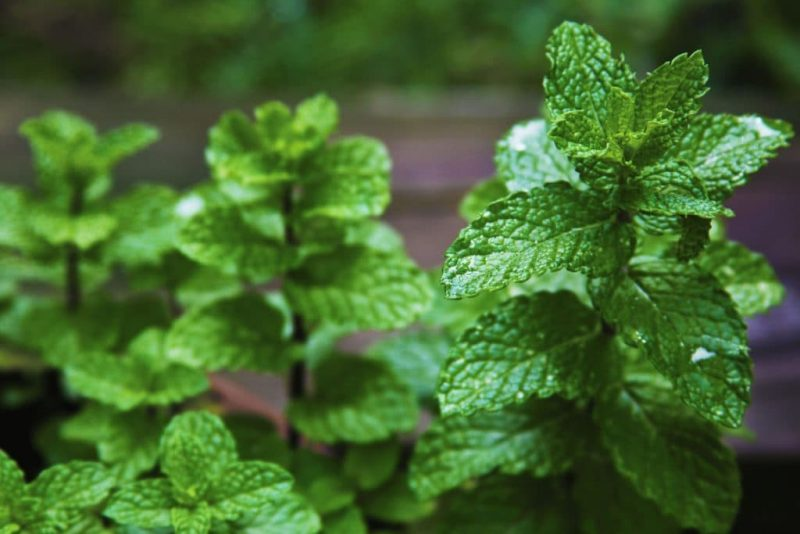 «Чем полезны травы для бани? Как сделать отвар для бани своими руками? Рецепты и рекомендации» фото - travy bani 7 800x534