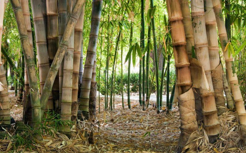«Бамбуковый веник для бани. Как пользоваться бамбуковым веником для бани?» фото - bambukovyj venik 4 800x500