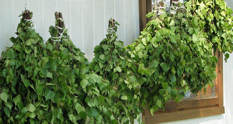 «Как делать березовые веники для бани?» фото - sushit veniki dlja bani iz berezy 1 800x426