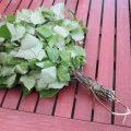 «Как делать березовые веники для бани?» фото - vihta 007 1024x768 120x120