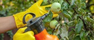 «Обработка сада и огорода от вредителей» фото - obrabotka sada vesnoy 8 330x140